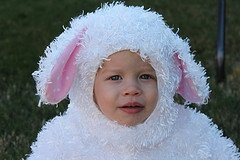 Sheep Parker