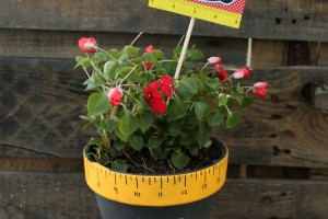 Teacher Appreciation Gifts – Flower Pot