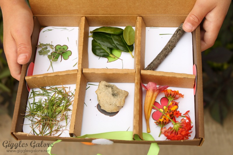 Kiwi Crate Nature Box