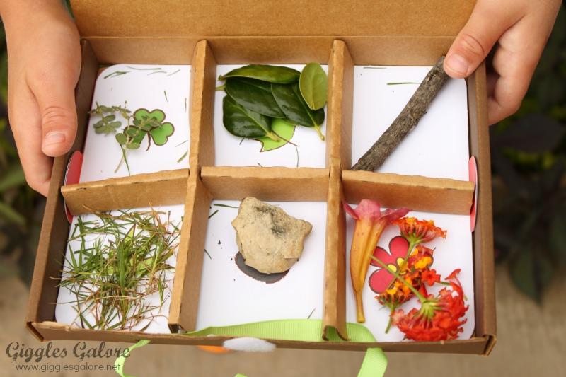 Kiwi Crate Nature Box