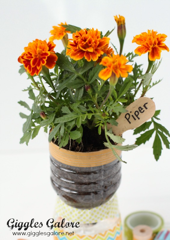 Flowers in Recycled Water Bottle Planter