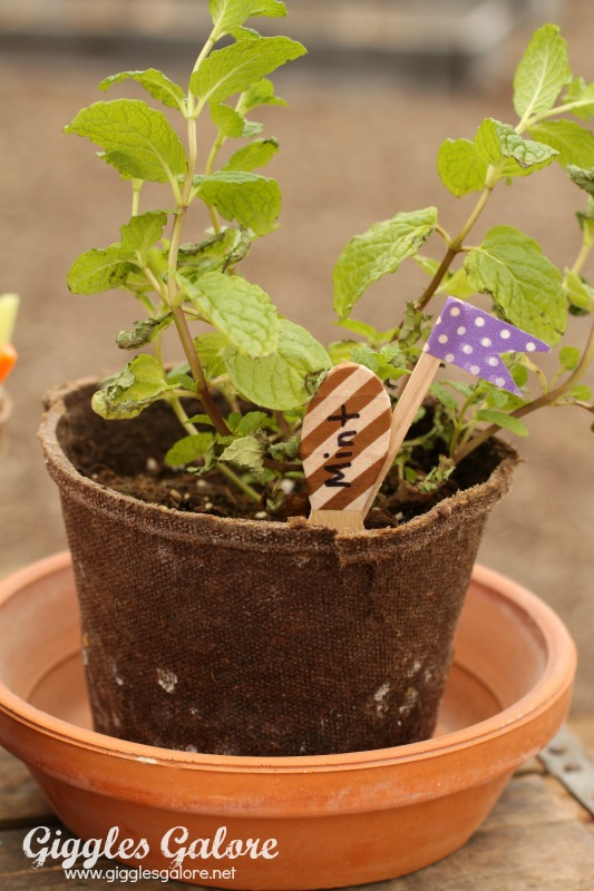 Spring Planting Party Mint_Giggles Galore