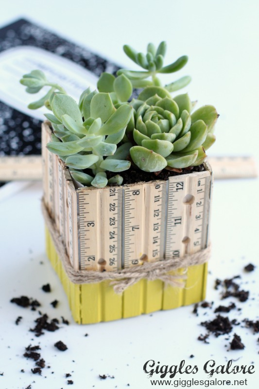 Succulent Ruler Planter