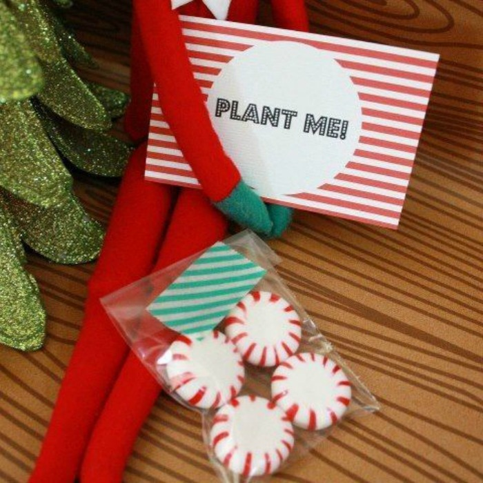 Grow Candy Canes, Elf on the Shelf Ideas via Giggles Galore