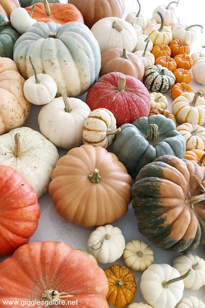 Calloway's Nursery Pumpkins