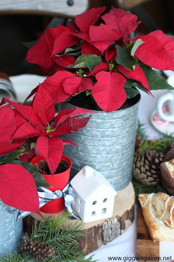 Holiday poinsettia centerpiece