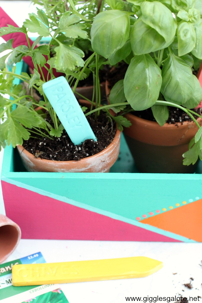 Color block herb garden