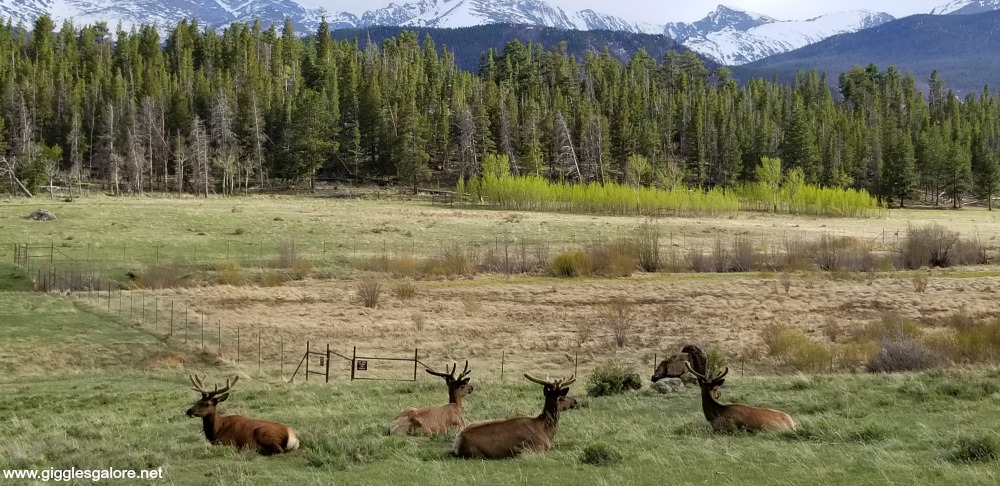 Rocky mountain national park wildlife