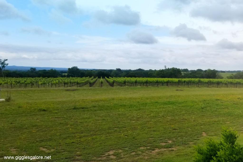 Narrow path vineyard
